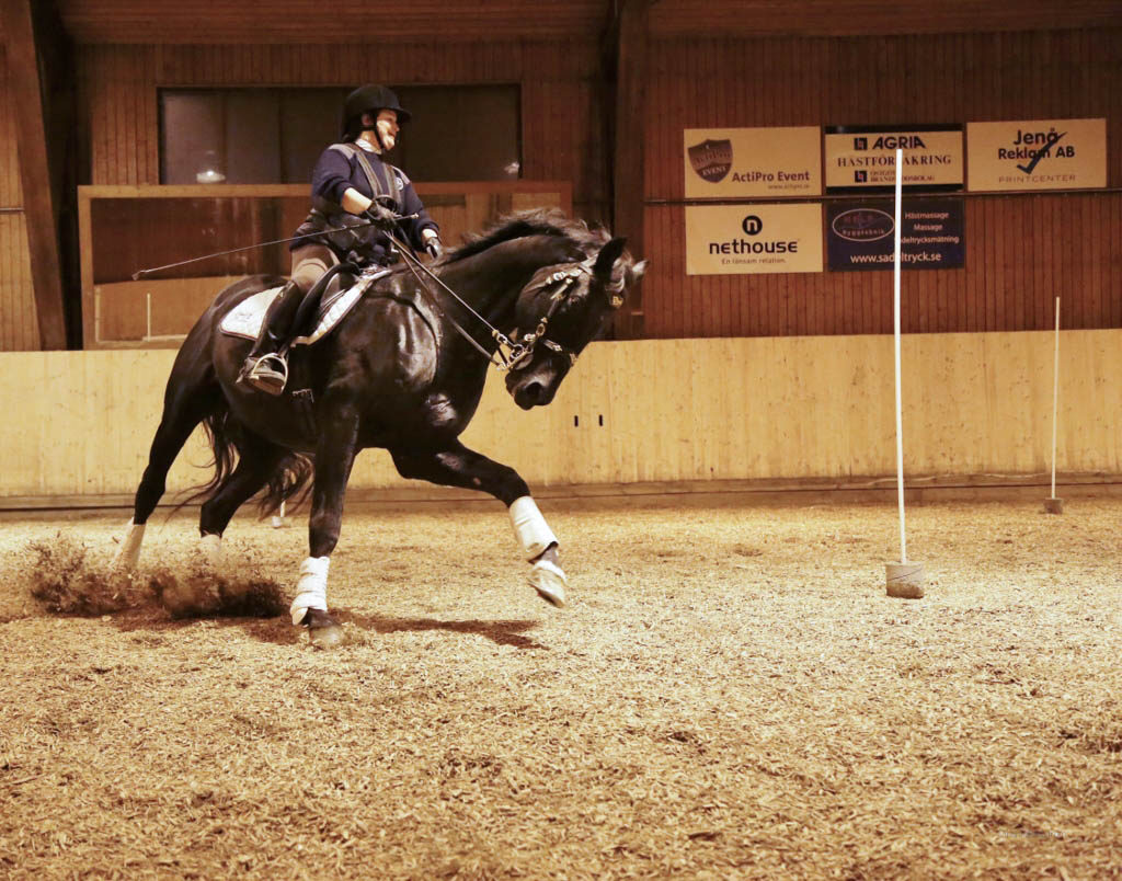 what-is-working-equitation-min