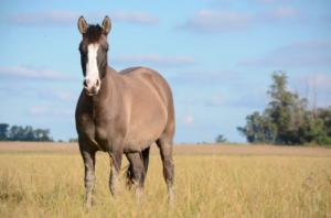 equine-partner