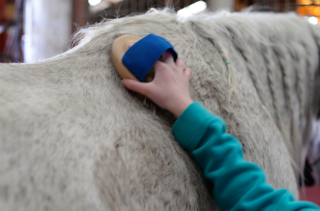 grooming-horse