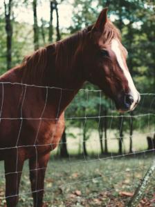 miss-horses