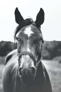 horse-sense-fear
