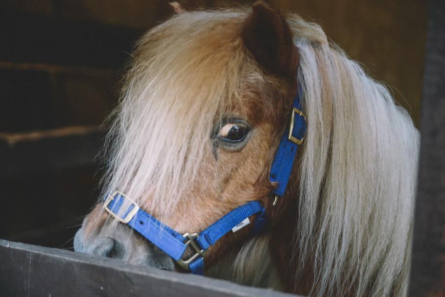 horse-sense-anxiety
