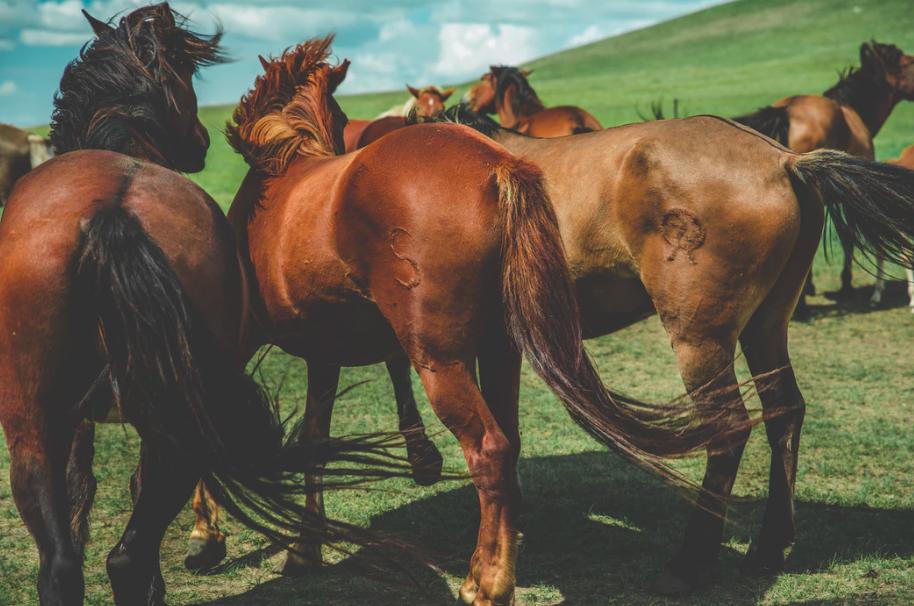 horse-body-language