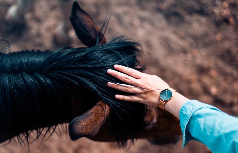 horse-human-bond