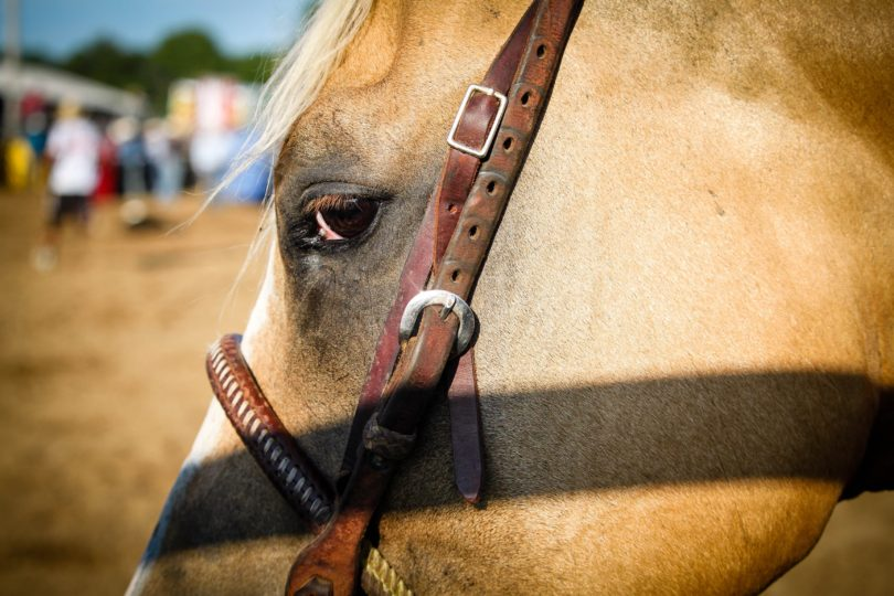 can-horses-sense-fear