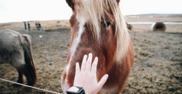 kick-fear-of-horses