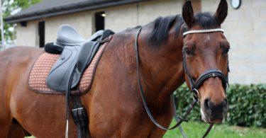 do-horses-like-to-be-ridden