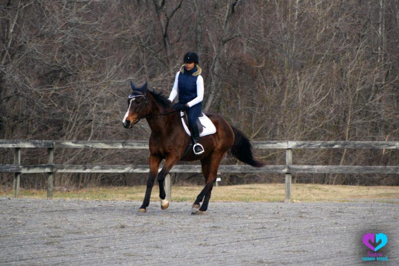horse rider gaining confidence