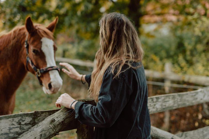 can-horses-sense-fear-anxiety