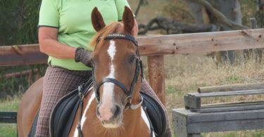 scared-ride-horse-mojo