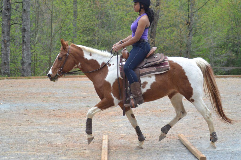 horse trot poles