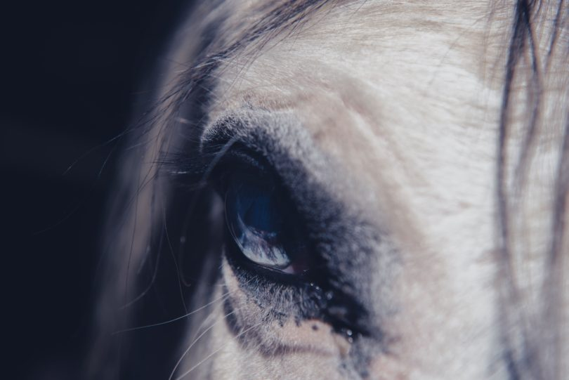 are-horses-dangerous