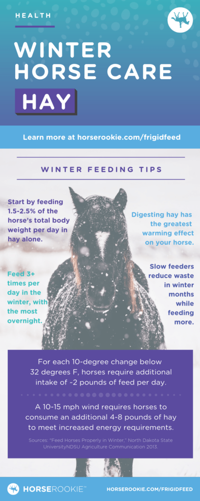 Horse Winter Horse Care Tips About Hay