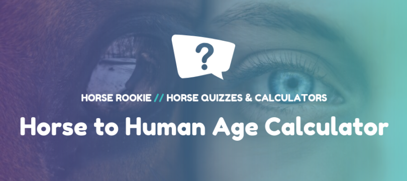 How old is my horse in human years