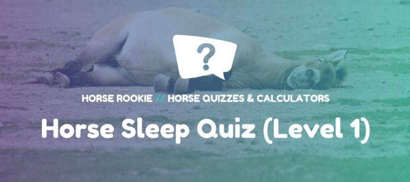 Quiz about how horses sleep
