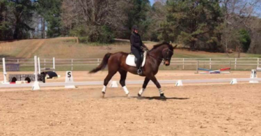 Best Dressage Boots for Horses