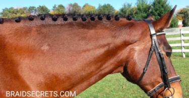 easy-mane-braids