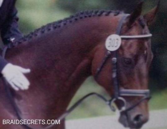 hunter horse braids