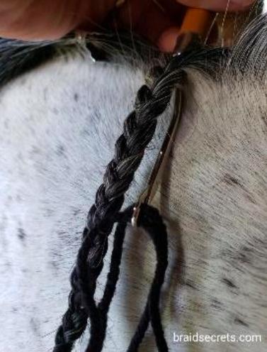 hunt seat braid 8