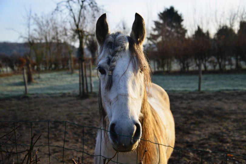 friendly horse