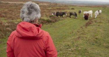 senior woman watching horses