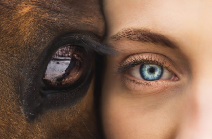 Horse Human Connection
