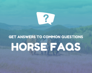 Horse FAQs