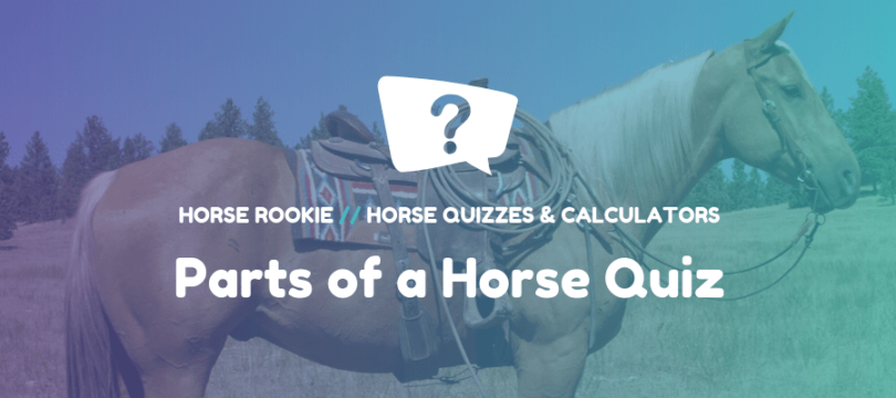 Parts of a Horse Quiz