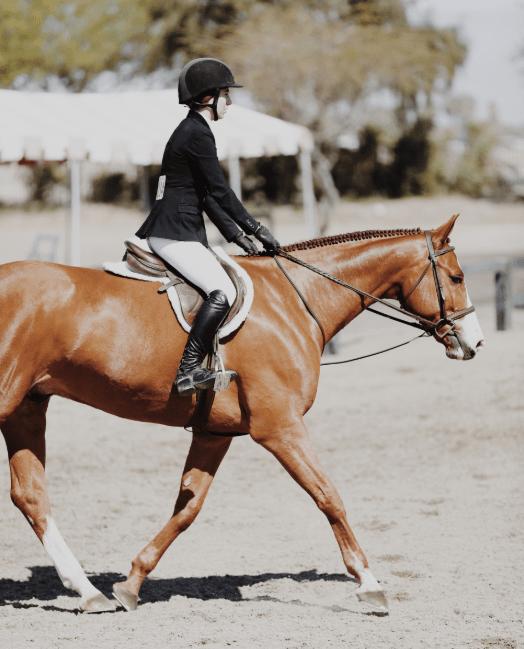 hunter jumper rider and horse