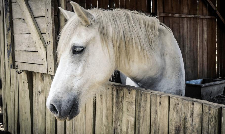 horse stall dutch doors