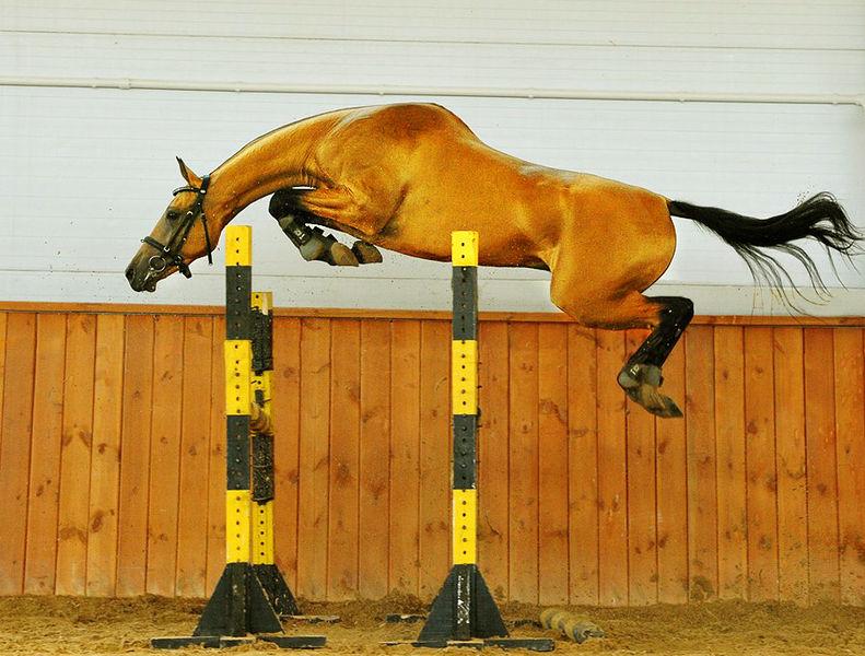 horse free jumping