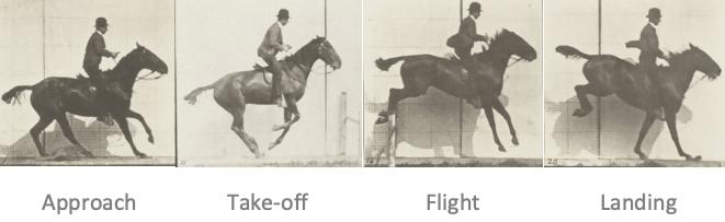 how horses jump