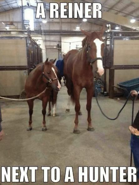 reiner vs hunter horse