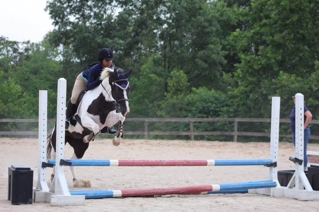 Can All Horses Really Jump You Ll Be Surprised