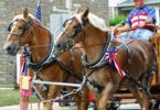Belgian horse pulling cart