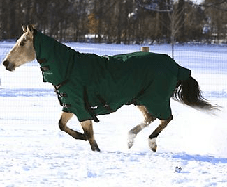 Tough-1 1200D Combo T/O Horse Blanket