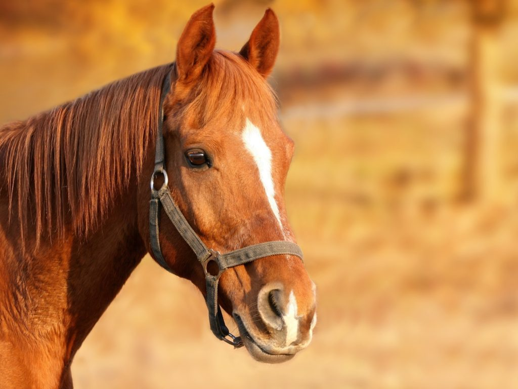 Horse Photography Pro Tips Settings Editing Examples