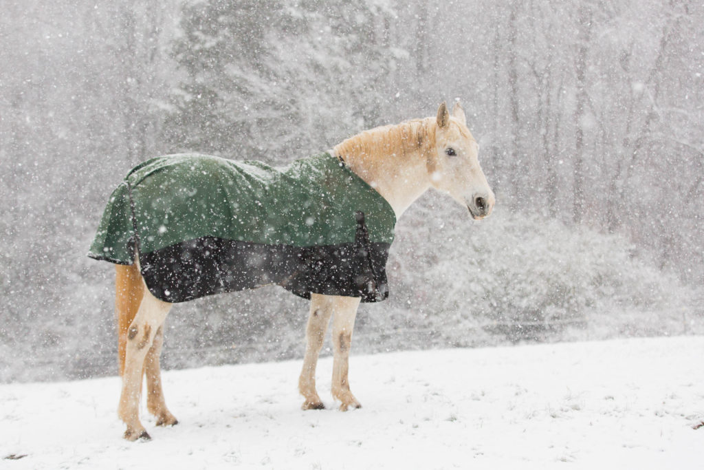 horse photography weather