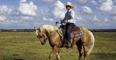 horse backing up