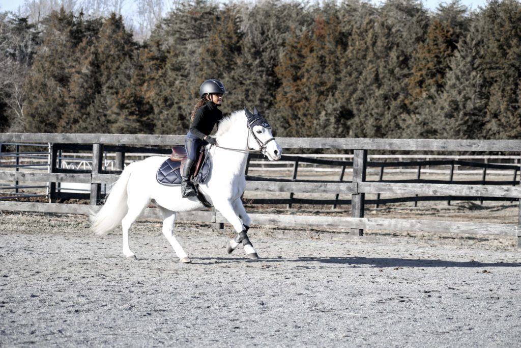 cantering pony