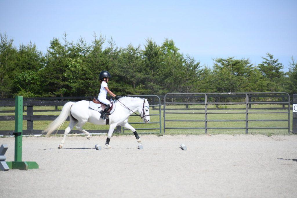 horse trotting groundpoles