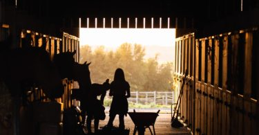 best boots for horse barns