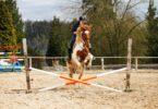 horse jumping crossrail