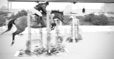 jumping horse 4 feet