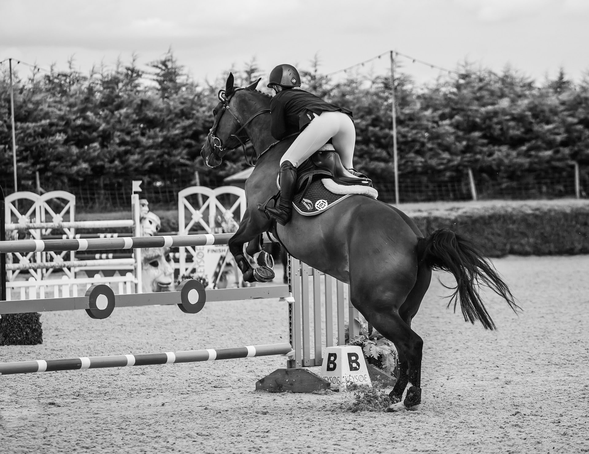 3 Easy Tips How To Approach A Horse Jump For Beginners