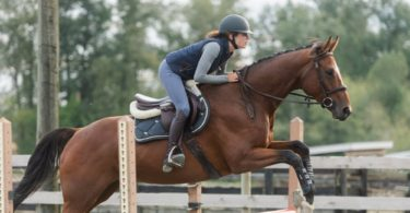 horse jumping glossary