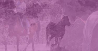 rebecca hall horse collage