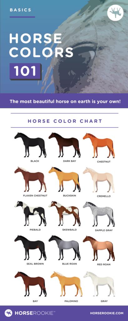 horse colors