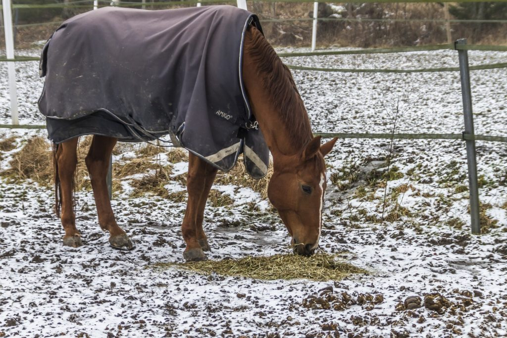 clipped horse in blanket