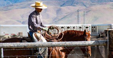 cow bred horse in herd